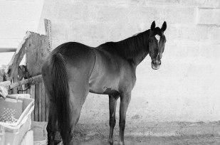 Horse | Chelsea Muscat